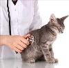 Ветеринарные клиники в Новотроицке